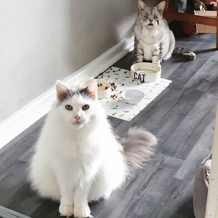 قطة مصابة بمتلازمة Ehlers-Danlos ,مرض القطط