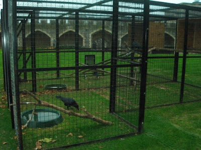Cuervos de la Torre de Londres