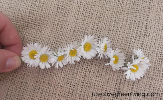 Daisy chain flower crown #creativegreenliving