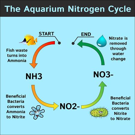 Nitrogen cycle in an aquarium