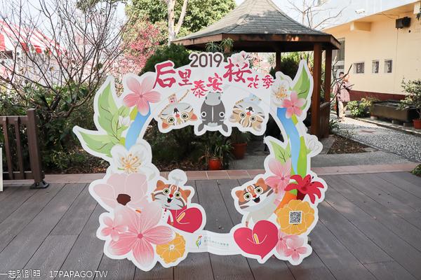 台中后里|2019后里泰安櫻花季2/16-3/3|全台最美泰安派出所|免費賞櫻熱門景點