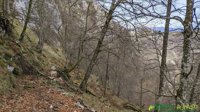 Bajando por el Camín de la Madera entre bosque