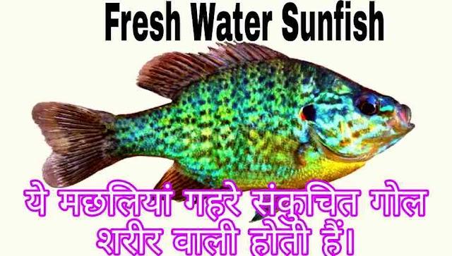 Fresh Water Sunfish क्या है ?