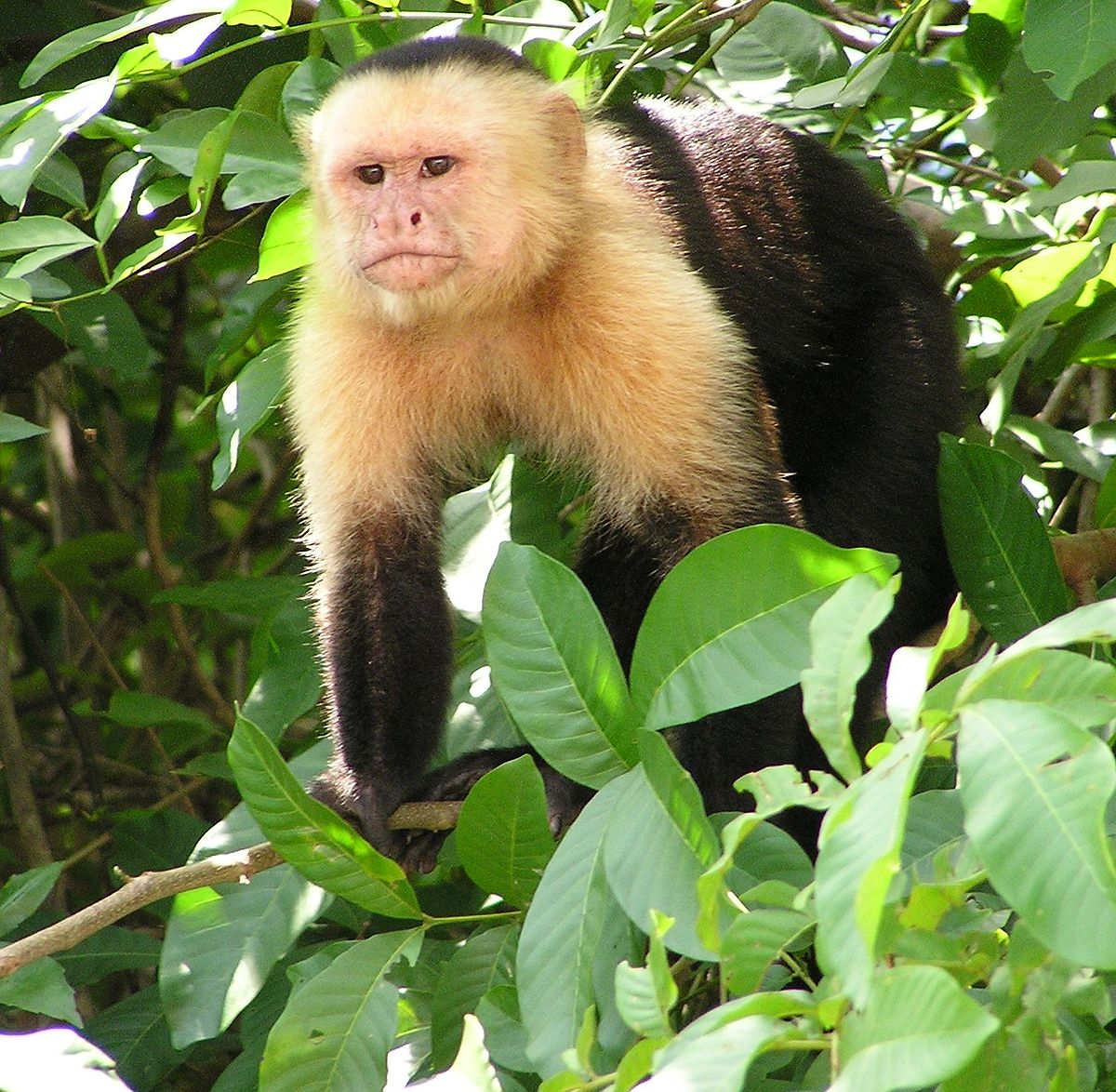 Zoo Jobs Primate Keeper