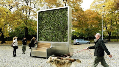 Muro de musgo