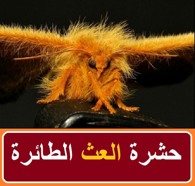 """""""حشرة العث الطائرة"""" """"حشرة السوس الطائرة"""" """"حشرة السوس تطير"""" """"هل حشرة السوس تطير"""" """"حشرة البق الطائره"""" """"حشرة البق تطير"""" """"حشرة تشبه السوس تطير"""" """"حشرة صغيره تشبه السوس تطير"""" """"حشرة السوس السوداء"""" """"حشرة السوس الخشب"""" """"هل حشرة البق تطير"""" """"هل تطير حشرة السوس"""" """"حشرات الفراش الطائرة"""" """"حشرات الفراش تطير"""" """"حشرة تشبه البق تطير"""" """"حشرة البق والتخلص منها"""" """"حشرة تشبه القمل تطير"""" """"حشرات صغيرة تشبه القمل تطير"""" """"حشرة تشبه السوس"""" """"حشرة تشبه الناموسة"""""""