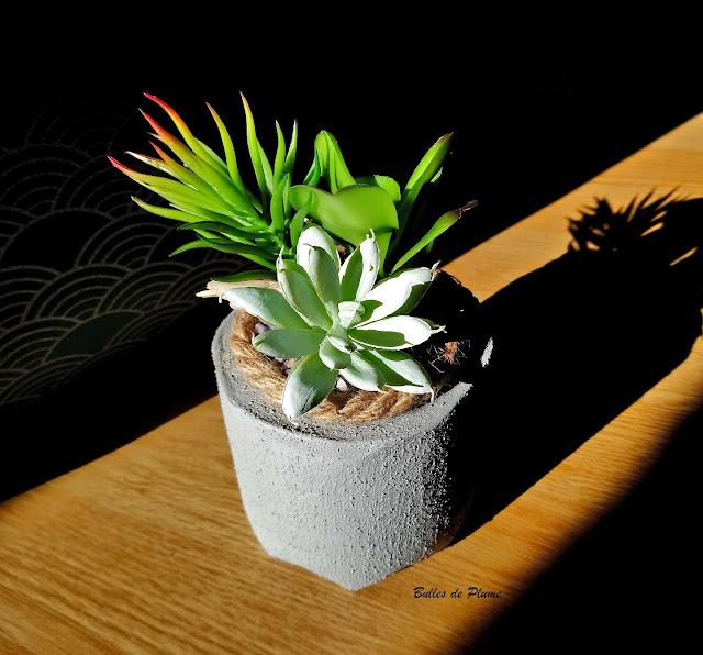 DIY Pot béton Cactus
