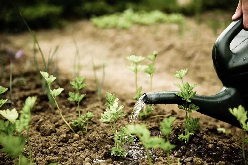 The velde voice great gardening tips for beginners this summer - Gardening tips for beginners ...