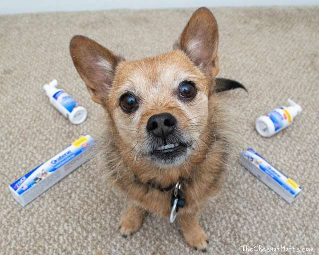 Jada with oratene dental products for dogs