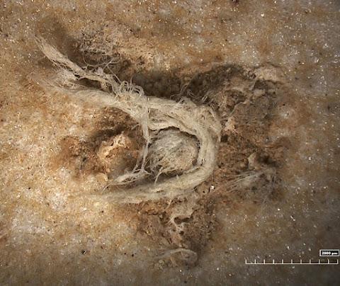 Neanderthal cord weaver