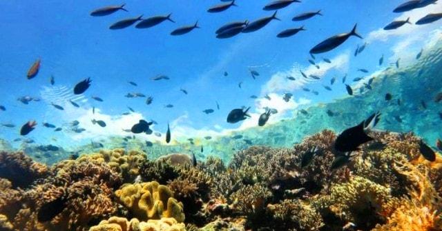 Cara Mencari Spot Mancing Ajib di Laut