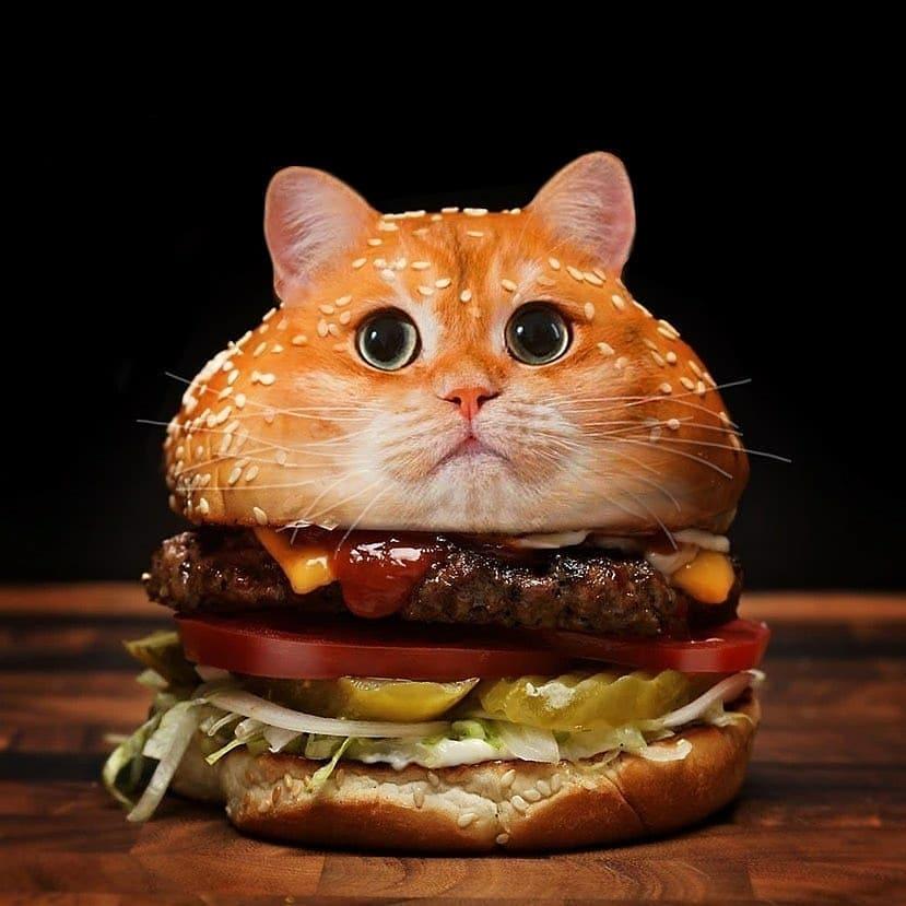 Burger-cat - photo manipulation