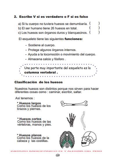 Hermosa Huesos Hoja De Trabajo Ilustración - hojas de trabajo ...