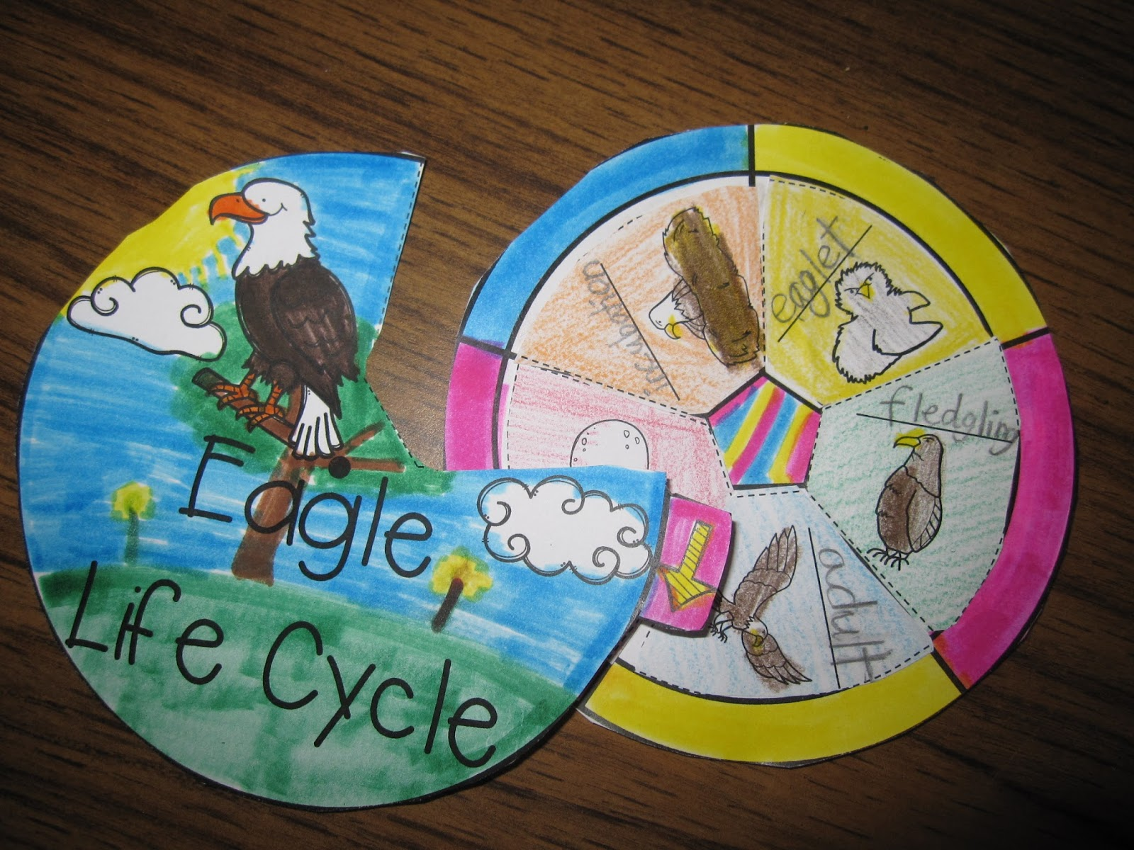 Hopping From K To 2 The Final Week Of Sun Sand And Summer Sale Life Cycle Also Bald Eagle Diagram In Addition Wheels More Learn All About Geared For 3 Label It Third Edition Helps Students With Skill Learning