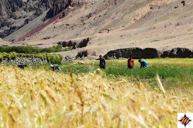Ladakh, Gya