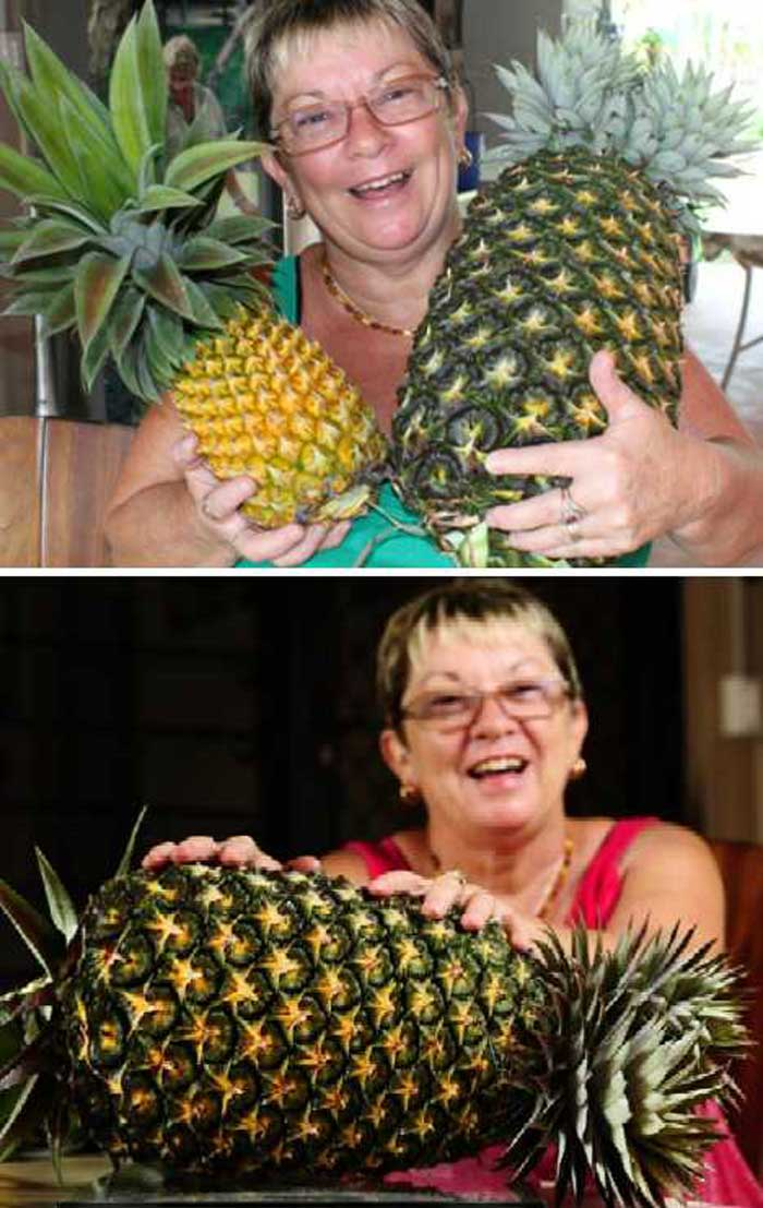 The world record for the largest pineapple