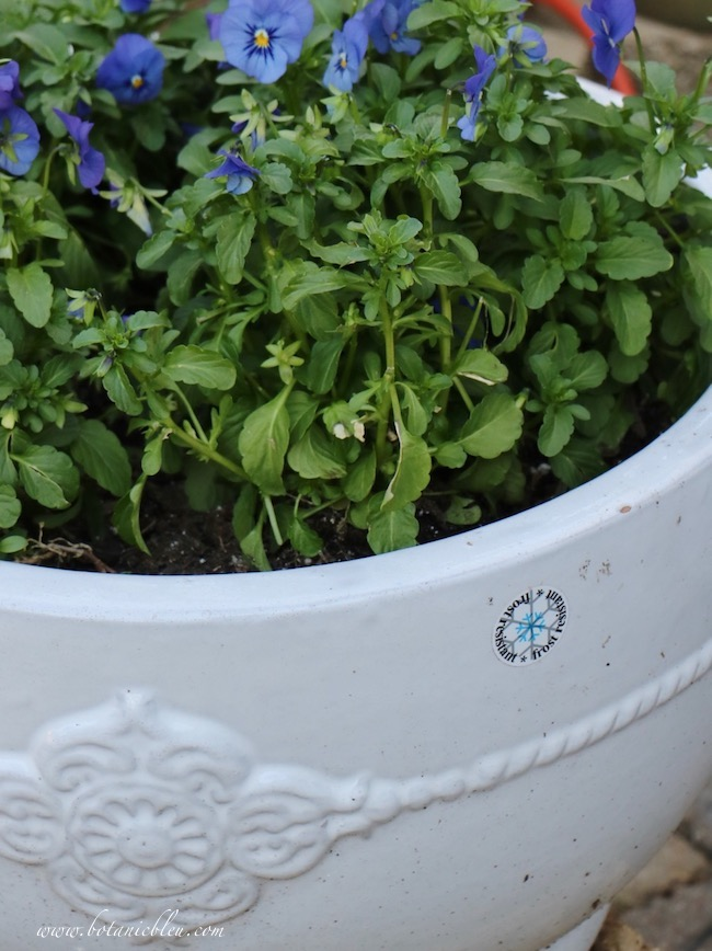 Winter botanicals like pansies do best in frost resistant pots