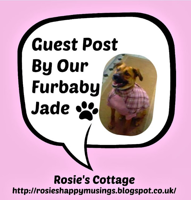 Guest Post By Jade Our Beloved Furbaby