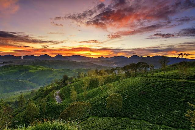 wisata alam kebun teh