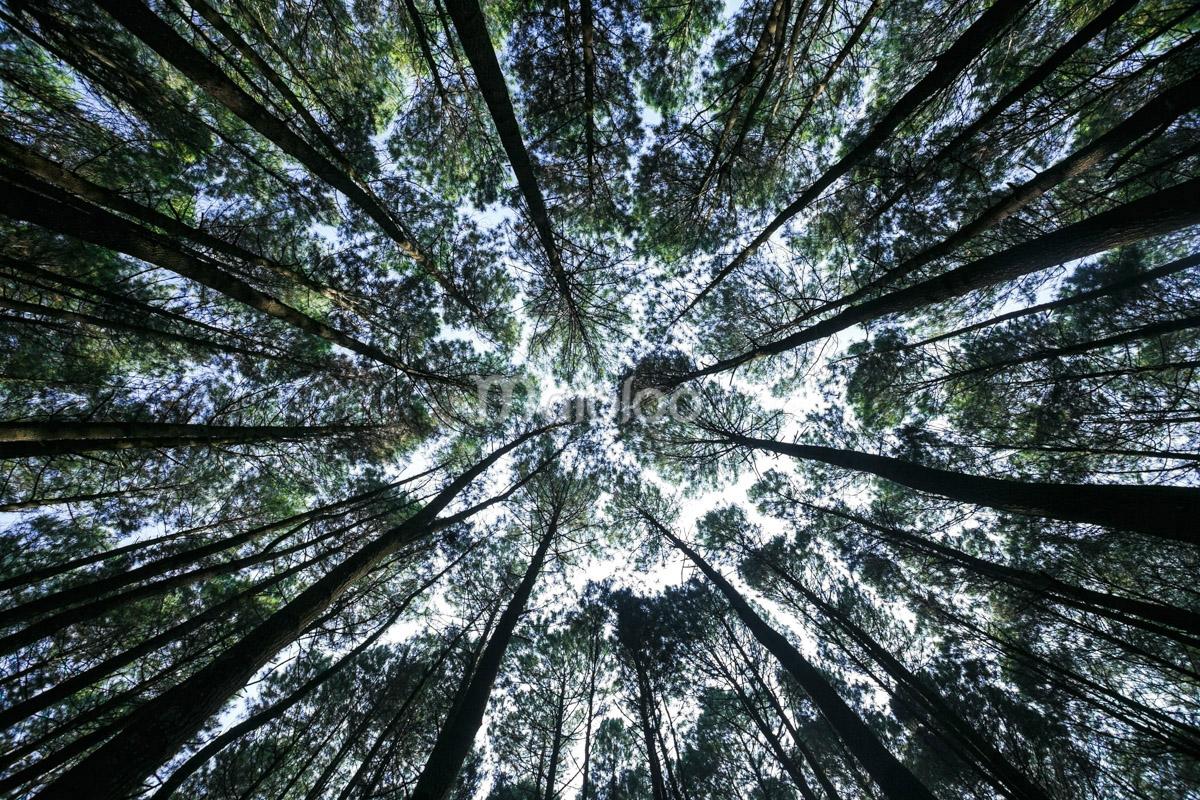 SunShine: Pesona Hutan Pinus Mangunan