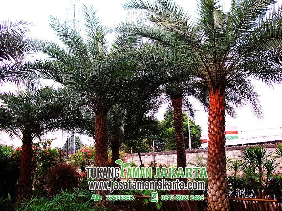 Tukang Taman Jakarta Telp 0813 8929 2486 Pin BB  275FE3ED