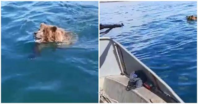 Супружеская пара спасла медведя во время рыбалки! Видео