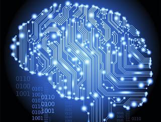 Conociendo el cerebro humano