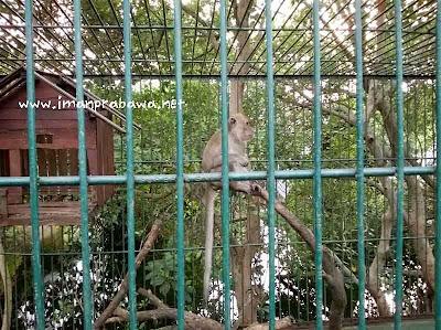 Monyet Di Taman Wisata Mangrove
