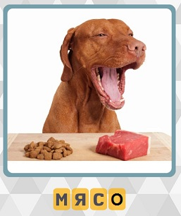 600 слов сидит собака и перед ней корм и мясо лежат 10 уровень