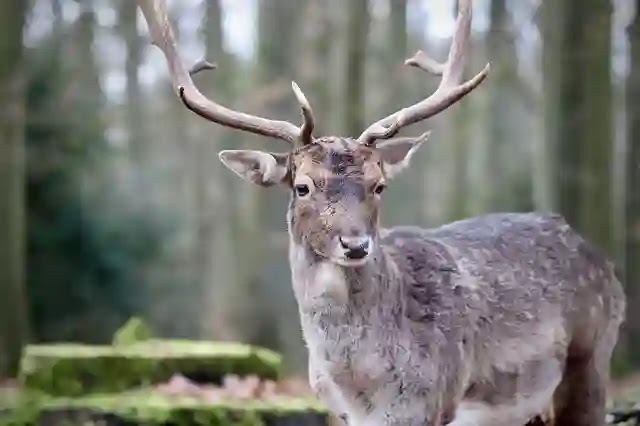 Strange Facts About Deer in Hindi