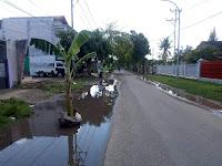 Jalan Menuju Kediaman Walikota Bima Digenangi Air, Warga Tanam Pohon Pisang