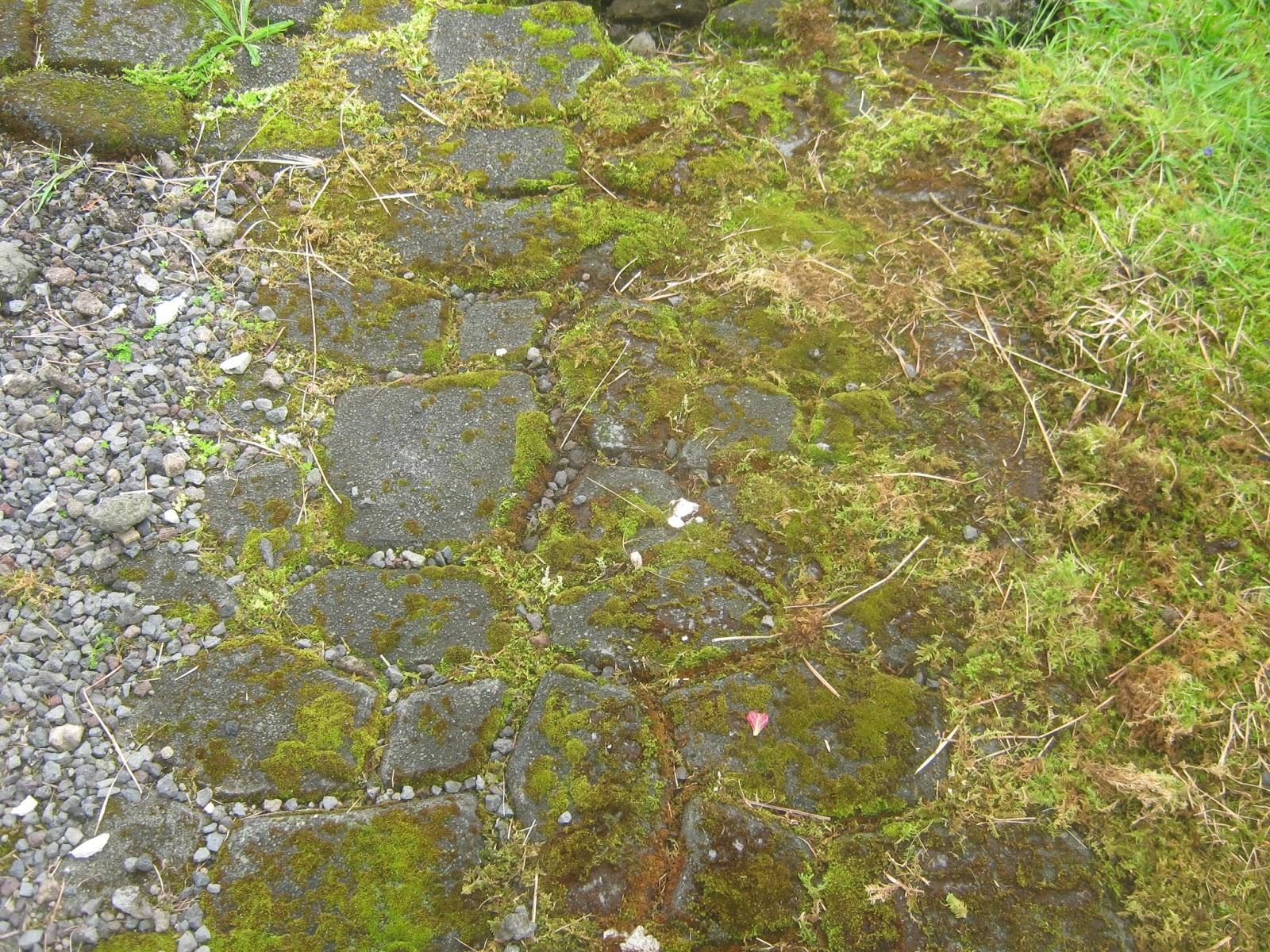 Moss and Algae = Slippery Sidewalks - Garden Guy Hawaii