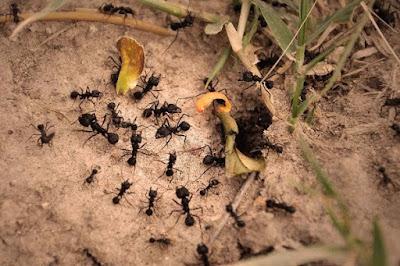 La edad de las hormigas