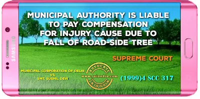 Municipal Authority is liable to pay compensation for injury cause due to fall of road-side tree
