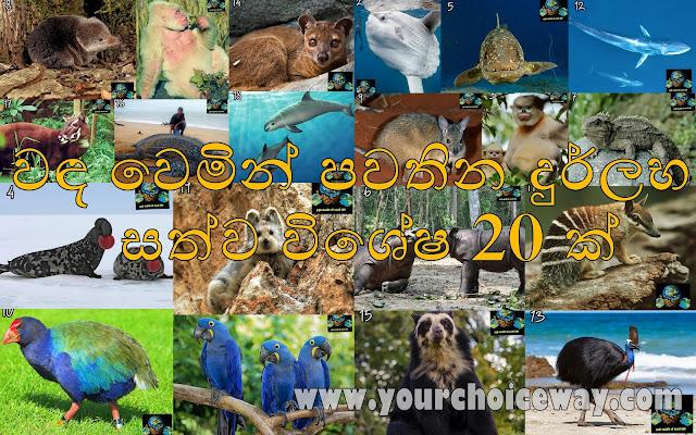වඳ වෙමින් පවතින දුර්ලභ සත්ව විශේෂ 20 ක් (20 Species Of Rare Animals) - Your Choice Way