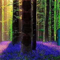 Wow Lavender Forest Escap…