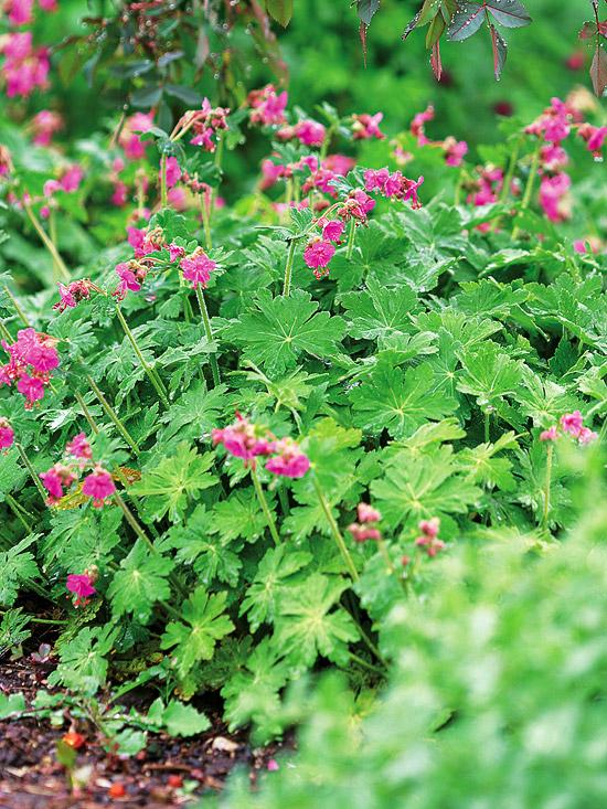 Plantas para zonas sombr as guia de jardin for Perennial wood