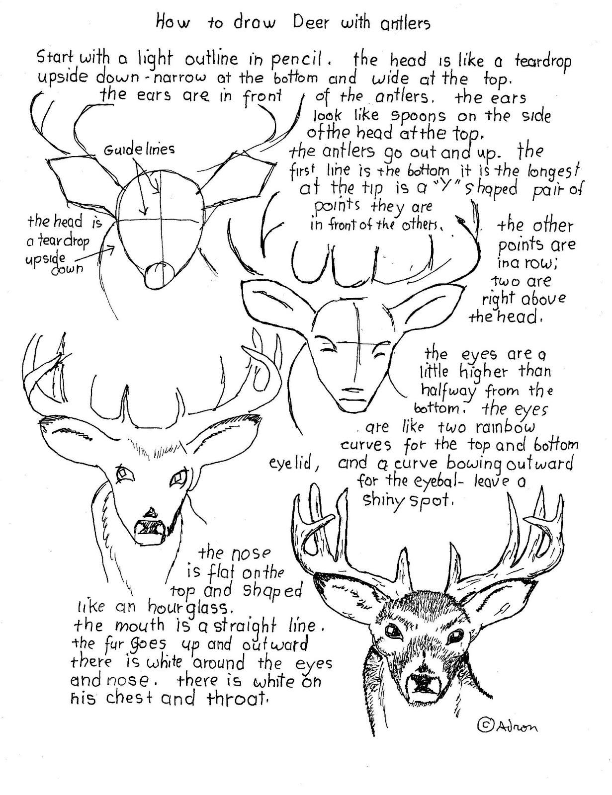 How to draw worksheets for the young artist how to draw a buck how to draw a buck deer with antlers worksheet robcynllc Choice Image