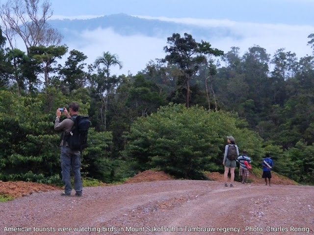 Mount Sakofsiah and Asses valley are important birding sites in West Papua for tropical birds