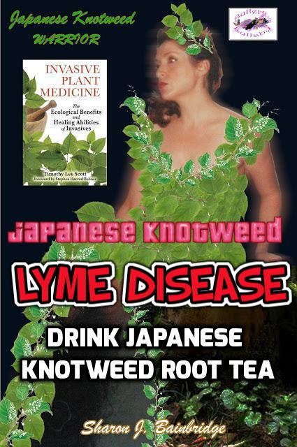 Butterfly Lullaby - Sharon J  Bainbridge: Japanese Knotweed LYME
