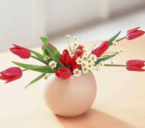 Chậu Hoa Tulip Đáng Yêu