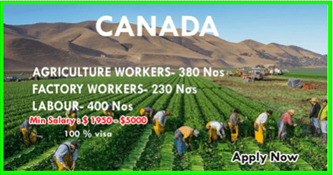 URGENT REQUIREMENT IN CANADA - APPLY NOW - worldswin | Find latest