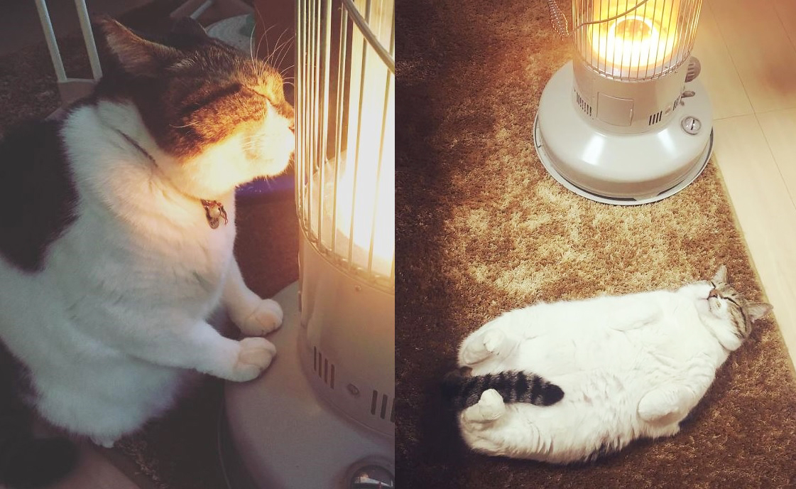 Cat with eyes closed with his front paws and nose on floor radiant heater