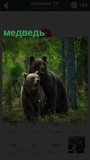 два медведя идут в лесу