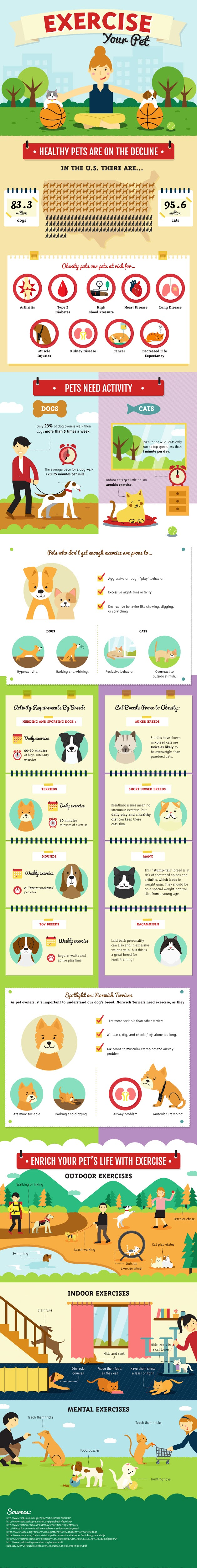 Exercise your Pet: Simple Solutions & Easy Answers #infographic #pets & Animal #Pet Exercises