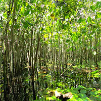 preservação de florestas