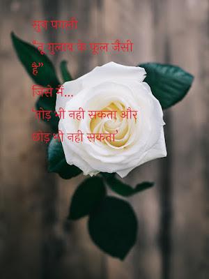 Rose Day 2020