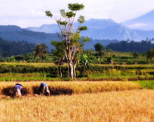 Cerita Moral Bahasa Inggris tentang Petani dan Anak Beserta Terjemahannya
