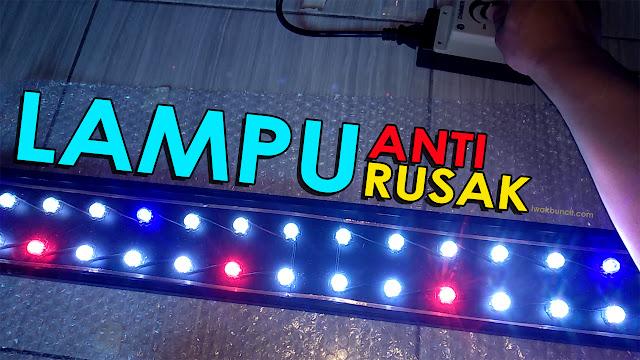 eview Lampu LED HPL DIY Aquascape di Aquarium Ikan Mas Koki: Terasa Overkill?