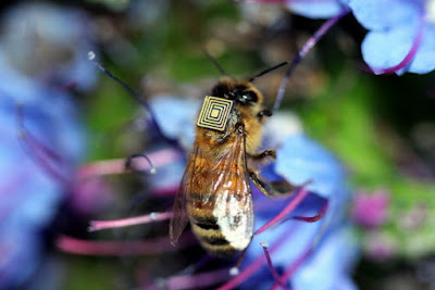 Honey bees have specified complexity in their genetic composition, including their design and behavior.